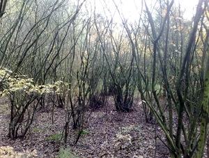 Wood 's Graveland