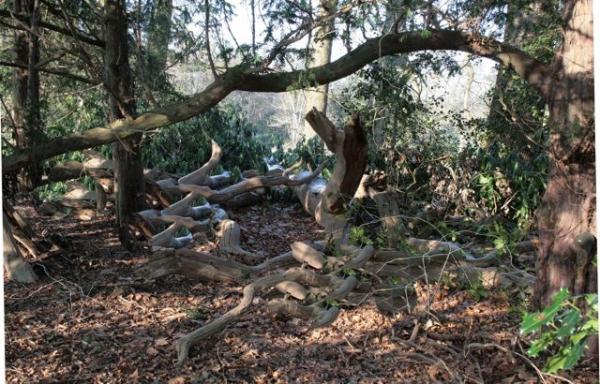 Wood s'Graveland